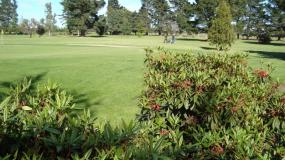 Find out more about Lincoln Golf Club